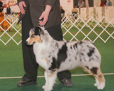 Jewell in the show ring